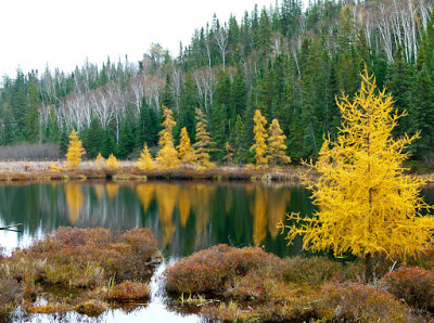 Create Tamarack Trees with the Thoughtful Branches Bundle Includes How To Video!
